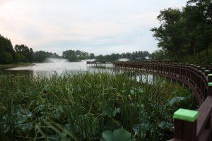 市民公園の池