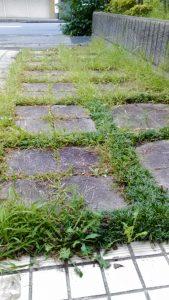 マンション玄関の草